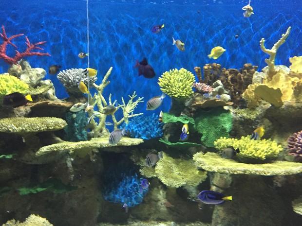 aquario-2