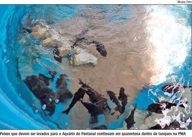 aquario-0