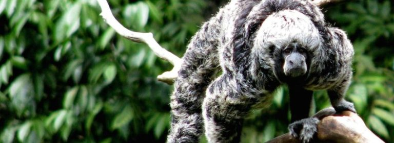 macaco prehistórico