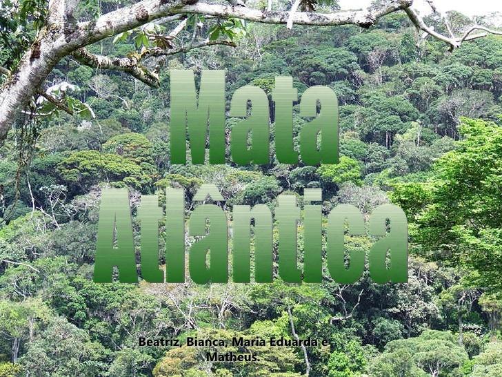 mata-atlntica-biomas-1-728