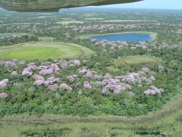 pantanal ms