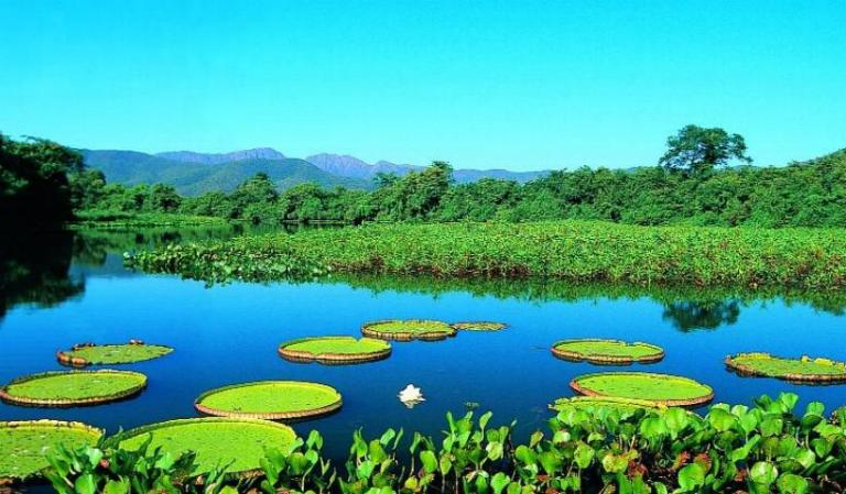 vegetacao-do-pantanal-1